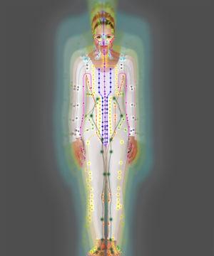 Meridian-model-bodies